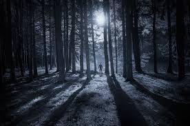 TreesMoonShadow